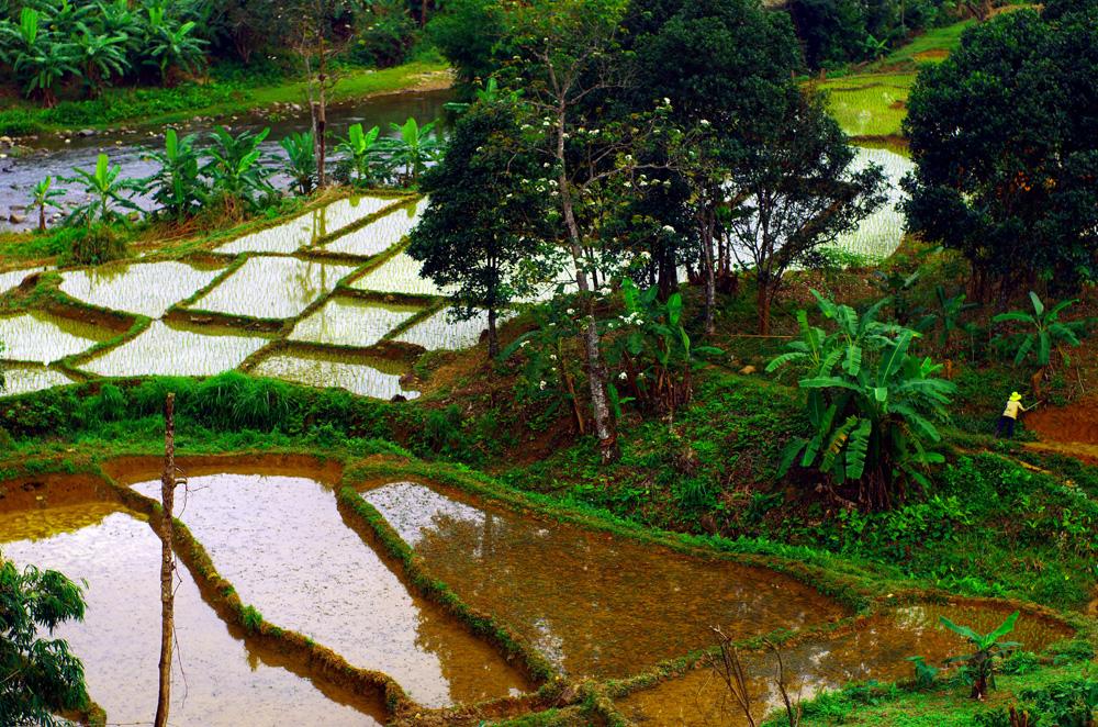 Le Vietnam compte environ 90 million d'habitants. Le riz est, comme bien souvent en Asie, l'ingrédient de base pour l'alimentation des populations. Les rizières nécessitent énormément d'eau pour permettre la croissance du riz et l'exploitation de celui-ci ne peut se faire quasiment qu'à la main ou à l'aide d'animaux, mais sans machine à cause de son environnement marécageux.