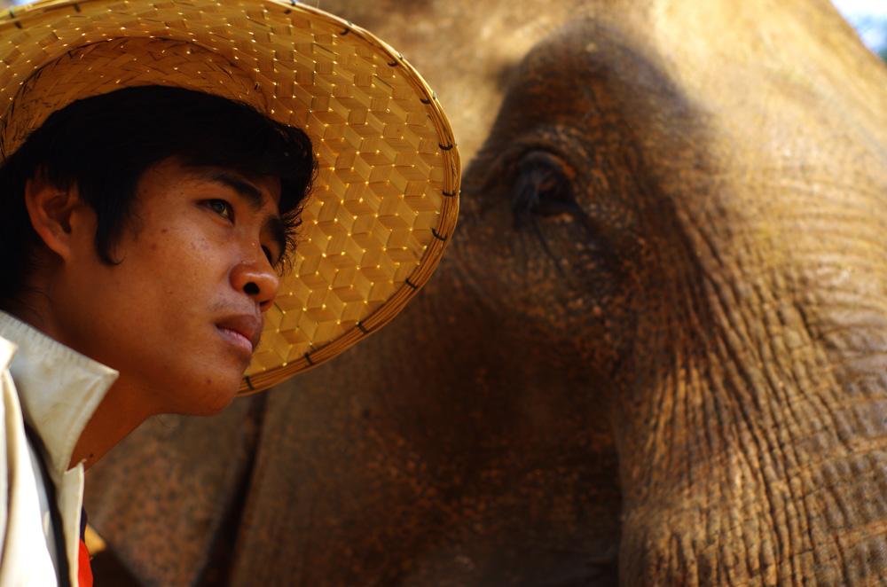 Le « maroud » est la personne qui s'occupe des éléphants. Au Laos il existe principalement 2 endroits où sont préservés les éléphants : à Sayabouly dans le nord-ouest du pays et à Champassak au sud-ouest. ElefantAsia, une ONG tenue par des français, officie principalement dans les réserves d'éléphants dans ces deux endroits. En particulier, un propriétaire d'une éléphante enceinte peut venir à leur centre de conservation pour mettre bas et ainsi bénéficier d'un emploi de 2 ans au sein du centre, période nécessaire à l'allaitement du nouveau-né. C'est une façon socialement intelligente de préserver l'espèce, étant donné que leur habitat sauvage se réduit d'année en année.