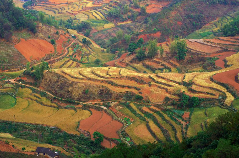 En Chine, les arc-en-ciels ne sont pas en l'air. Après les cultures de thé, c'est sur les crêtes des montagnes à parfois près de 2000m d'altitude que les vues offertes sur les vallées nous donnent un nouveau type de paysage riche en couleurs.