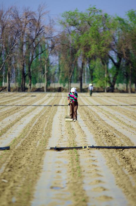 Les travailleur des champs le long des routes sont nos compagnons durant nos longues journées de vélo. Dans la région, on cultive du blé, du maïs mais aussi des melons, du raisin, betteraves...