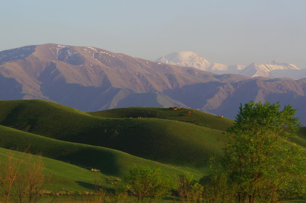Nous ne nous lassons pas des contrastes qu'offrent ces collines vertes sur fond de montagnes enneigées à près de 5000 mètres. Si nous avons la sensation de voyager dans un tableau en perpétuel mouvement nous sommes en réalité sur les terres des ces hommes et de ces bêtes.