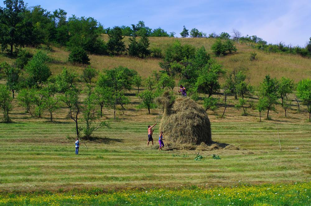 C'est l'été, et dans l'Europe agricole, c'est l'heure des moissons et de faire des réserves pour l'hiver. Ici, des paysans constituent un tas de foin pour le faire sécher et le stocker pour le bétail cet hiver.