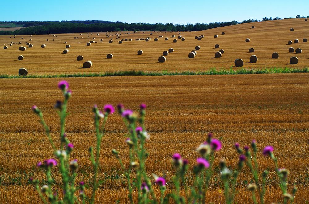 L'art dans les champs.